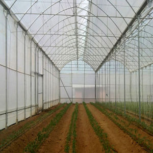 Factory Price Manual and Automatic Plastic Greenhouse pictures & photos