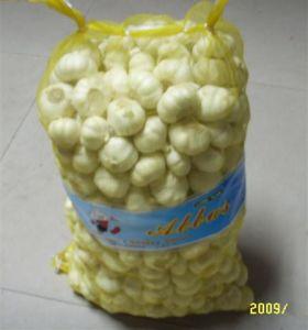 Garlic (Size 5.0-6.0cm Up)