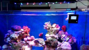 Aql-3s-120W 60cm Intelligent LED Auqarium Lamp for Marine Coral Grow pictures & photos