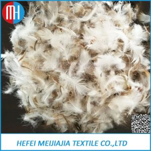Sell 2-4cm Washed Grey or White Duck Feather for Filling pictures & photos