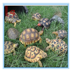 Customized Wholesale Simulation Animal Resin Handicraft Turtle Model Furnishing Articles Garden Decoration pictures & photos