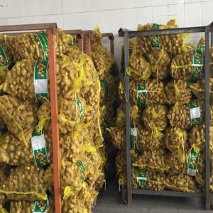 2015 Fresh Ginger (100-150 g, 200g -250g) pictures & photos