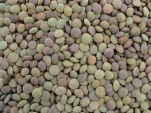 Chinese Lentils/Green Lentils (LT-004) pictures & photos
