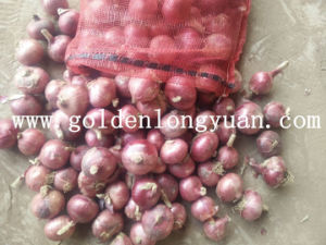 Factory Supply Fresh Red Onion pictures & photos