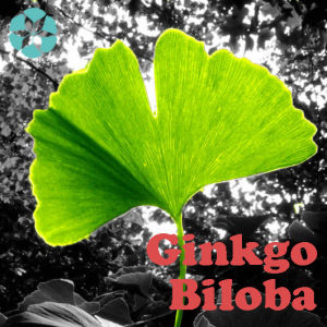 Ginkgo Biloba Extract / Flavone Glycoside / Terpene Lactone pictures & photos