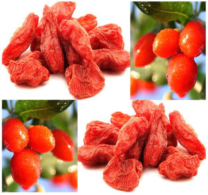 Ningxia Lycium Barbarum (wolfberry) Goji Berry pictures & photos