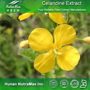 100% Natural Celandine Extract (Ratio: 4: 1~20: 1)