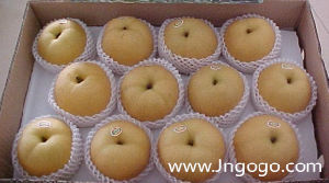 New Crop Export Good Quality Chinese Fengshui Pear pictures & photos