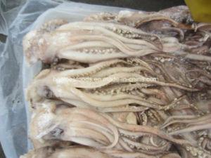 Frozen Illex Argentinus Squid Head pictures & photos