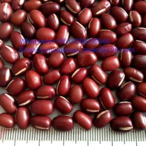 HPS Quality Red Mung Bean New Crop Red Bean PP Bag pictures & photos
