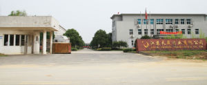 GMP Factory Supply Sophora Extract 98% Oxymatrine pictures & photos