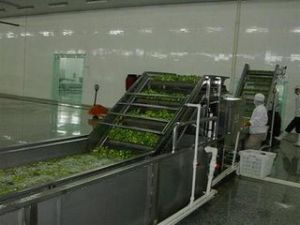 Automatic Fresh Fruit Vegetable Scalding Machine pictures & photos