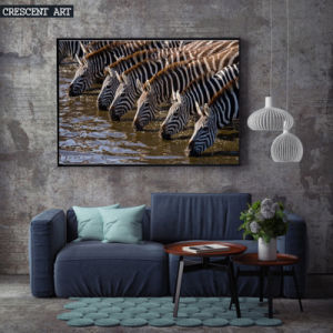 Canvas Print of a Herd of Zebras Driking Water pictures & photos