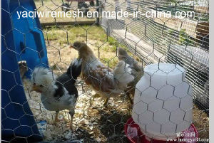 Cheap Price Anping Galvanized Chicken Hexagonal Wire Mesh Yaqi Supply pictures & photos