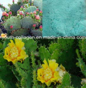 SOD /Superoxide Dismutase Herb Extraction, 100%Natural Organic Cactus Extract, Antioxidant, Whitening, Antiwrinkle and Moisturizing, Health Food pictures & photos