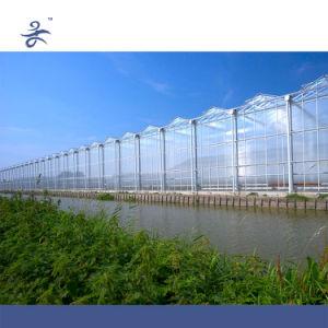 Venlo PC Hydroponic Greenhouse
