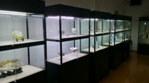 Glass Displays/Showcases pictures & photos