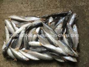 14-18PCS/Kg Frozen Round Scad pictures & photos