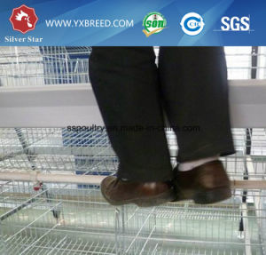 Atype Chicken Cage  Poultry Equipment (A3L90) pictures & photos