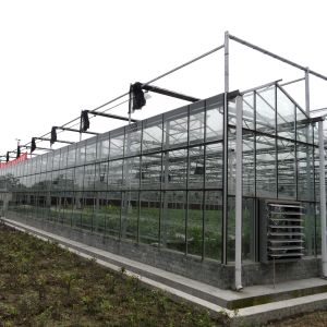 Agricultural Multispan Glass Greenhouse for Vegetable pictures & photos