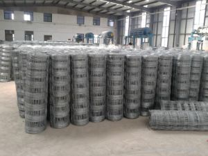 Stainless Steel/PVC Coated Fence/Cattle Fence Wire Mesh pictures & photos
