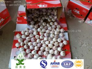 Red Garlic /Normal White Garlic 5.0cm in Carton