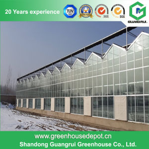 Venlo Type Glass Greenhouse with Structure for Sale pictures & photos