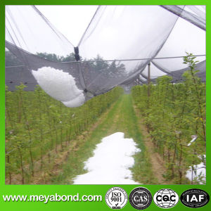 100% Virgin Hail Net /Anti Hail Net for Fruit Tree pictures & photos