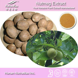100% Pure Nutmeg Extract (Ratio: 4: 1, 5: 1, 10: 1, 20: 1) -Nutramax Supplier