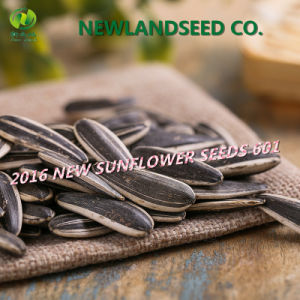 2016 Dried and Raw Sunflower Seeds with Top Quality 601, 5009, 0409, 3939, 363 pictures & photos