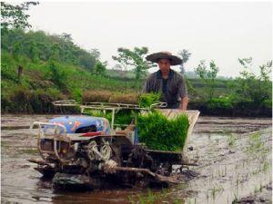 Belt Type Rice Transplanter (2ZT-8238BG)
