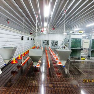 Prefab Steel Poultry Shed with Environmental Control Feeding System pictures & photos