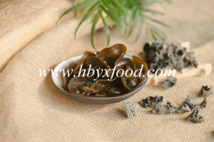 Within 3cm Dried Black Fungus From Chinese Supplier pictures & photos