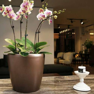 Matte Round Self-Watering Flower Pots Supplies pictures & photos