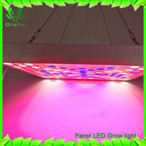 45W LED Grow Light Panel Red Blue Lighting for Indoor Plants Seedling Growing Flowering pictures & photos