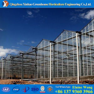 Multispan Comomercial Glass Green House for Tomato pictures & photos