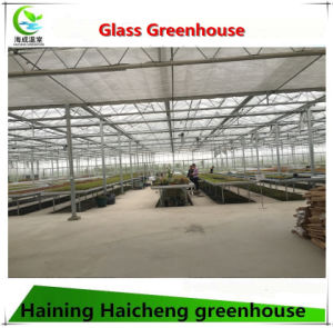 Multi Span Commercial Hydroponic Glass Green House for Raspberry pictures & photos