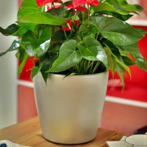 Matte Round Self-Watering Flower Pots Supplies pictures & photos