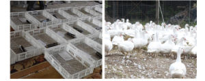Wholesale Commercial Chicken Incubator Digital Poultry Incubator pictures & photos