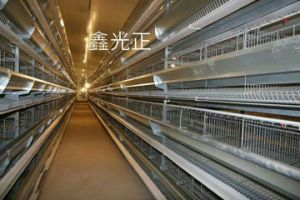 Prefab Chicken Farm/Steel Structure Poultry House with Equipments (JW-16252) pictures & photos