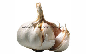 Factory Natural Garlic/Allium Sativum L. Extract Powder pictures & photos