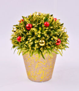 Charming Rosemary Ball Plants with Red Berry in Paper Mache Pot