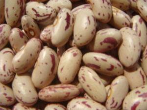 2012 Crop Light Speckle Kidney Beans
