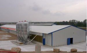High Quality Steel Construction Poultry Farm with Poultry Equipments pictures & photos