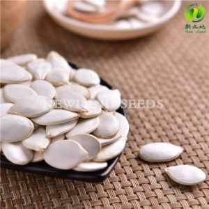 Natural and Good Quality Snow White Pumpkin Seeds pictures & photos