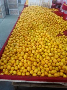 Export New Crop Fresh Good Quality Orange pictures & photos