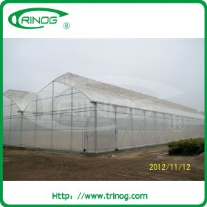 Multi-Span Film Greenhouse with filx roof vent pictures & photos