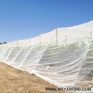 White Anti Aphid Mesh Insect Net Made by Sulzer Machine pictures & photos
