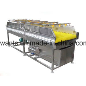 Vegetable Processing Brush Roller Washing Machine pictures & photos