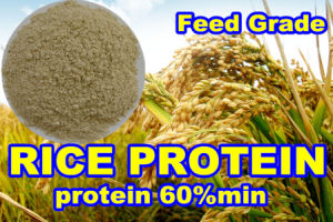 Rice Protein for Feed Additives (protein 60 min) pictures & photos
